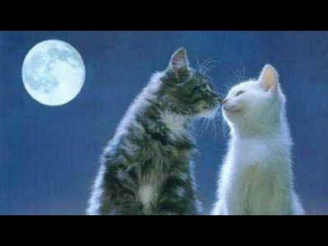 Download 61+  Gambar Kucing Romantis Paling Keren