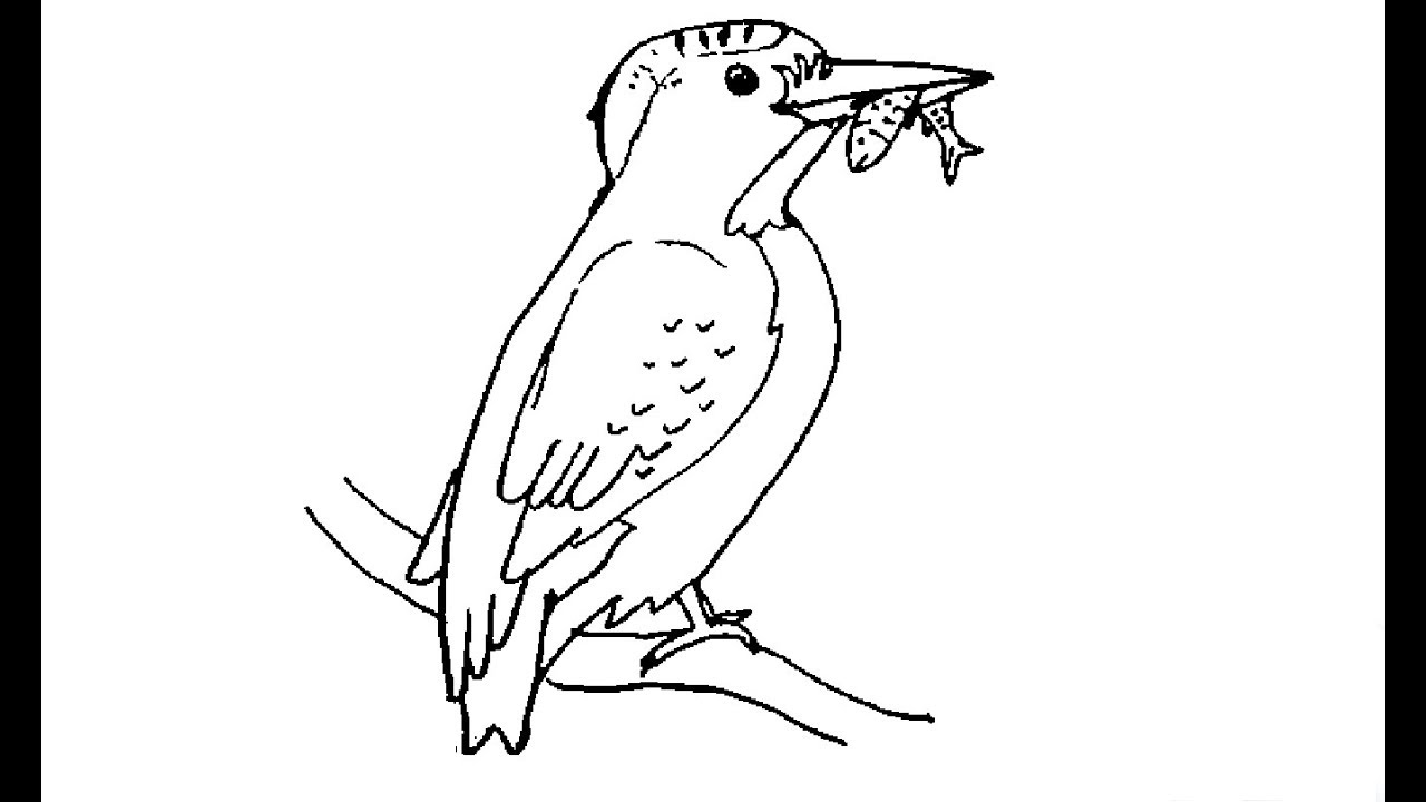 How To Draw A Kingfisher In Easy Way आस न तर क स