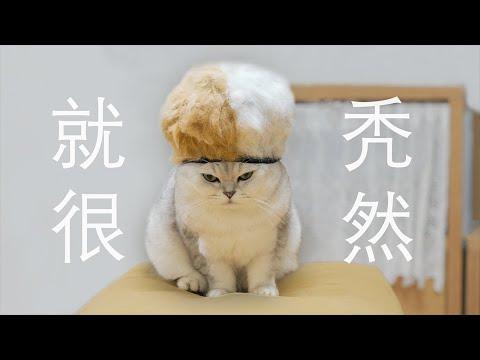 做视频5年终于秃了,撸光猫的毛做成假发!