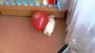 Смешно до слез! Кролик испугался