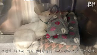 Ato is in hospital again. (Hiatal hernia, Megaesophagus, Megacolon)