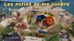 Potins de ma volière - Festin Royal du Choucador