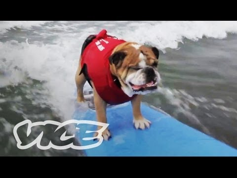 Cute Surfing Dogs!