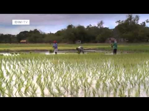 Climate-friendly rice farming in the Philippines | Global Ideas