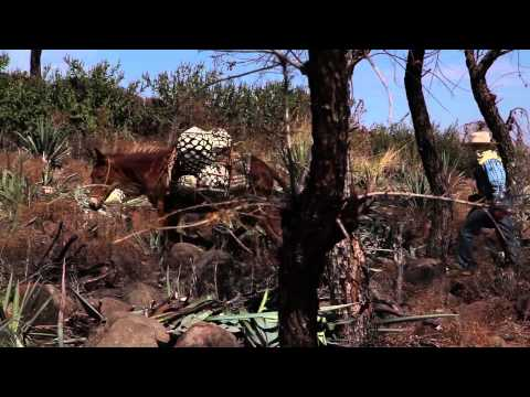 Flamenco Symphony Dulce Vida Tequila Promo Video