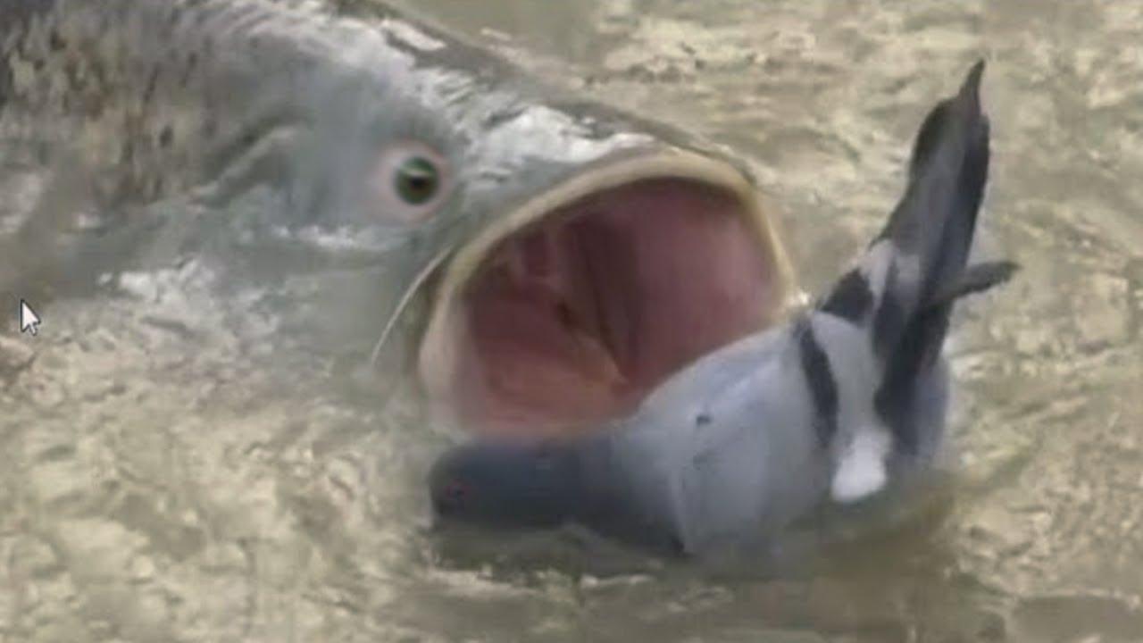 20 Badass Ocean Creatures That Eat Land Animals