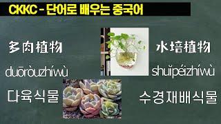 단어로 배우는 중국어 - 0544 DuoRouZhiWu…