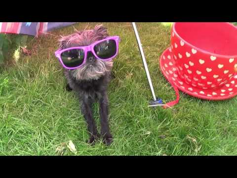 The many shades of Pippa the ickle Affenpinscher