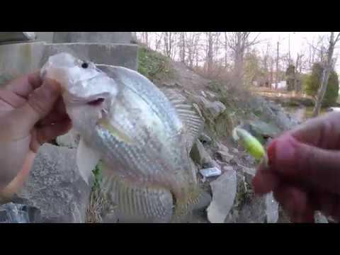 Crappie Fishing HIGH ROCK LAKE, NC