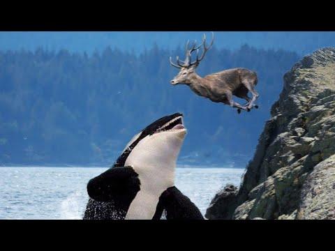 15-badass-ocean-creatures-that-eat-land-animals