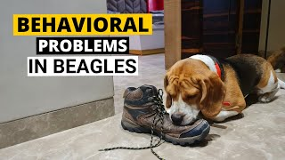 7 Common Behavioral Problems in Beagles and How to Deal with them