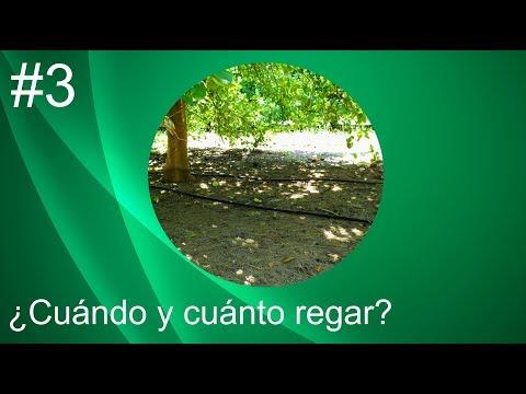 3. Diseño de sistemas de riego: Diseño Agronomico thumbnail
