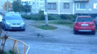 Охота на моржа 2(Охота на моржа 2., 2014-10-27T03:49:03.000Z)