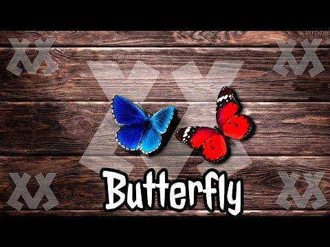losen-lm---butterfly-(alan-walker-style)