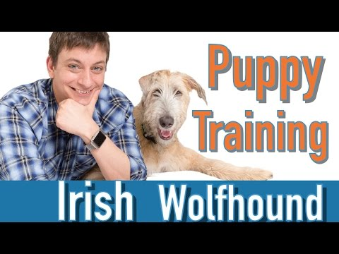 Puppy Training Check-In!