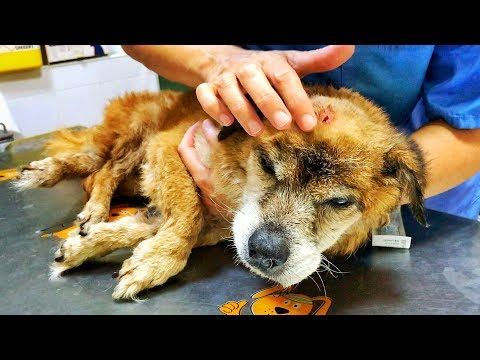 Amazing old dog  hit with a hammer, and thrown to the trash !