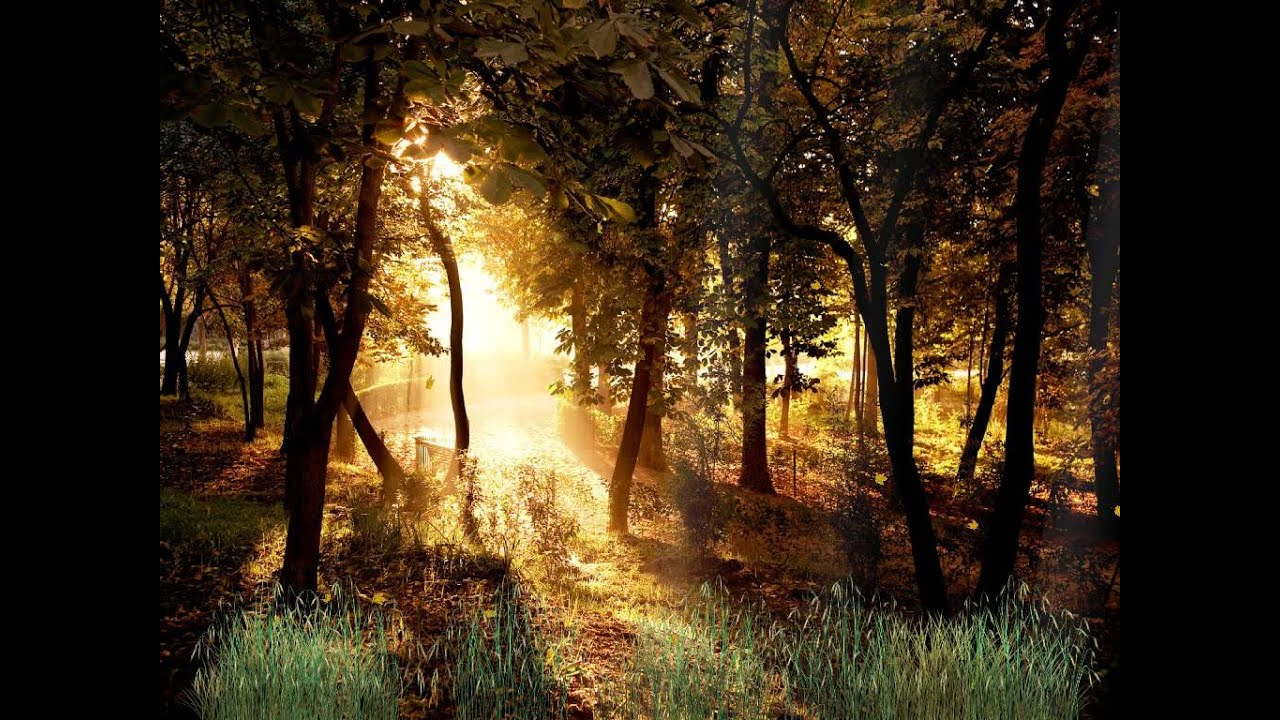 3d Live Animated Wallpaper Download Beautiful Forest Animated Wallpaper Http Www