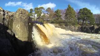 Tim Low Force The Tees
