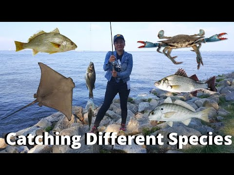 Fishing In Maryland | Fishing In Action At Chesapeake Bay