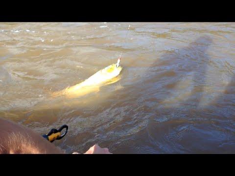 Pescaria de Dourado Rio Ivaí - Gulino