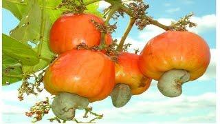 Las 6 Frutas y Verduras Mas Toxicas Que Consumes A Diario