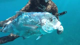 spearfishing in the north shore of puerto rico