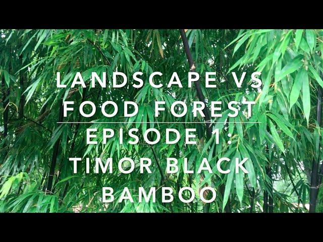 Landscape vs Food Forest. Episode 1: Timor Black Bamboo