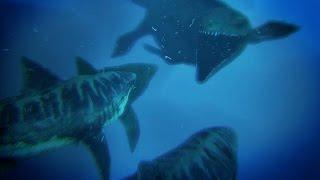 OCEAN DOMINANCE - MOSASAURUS V MEGALODON | Ark: Survival Evolved