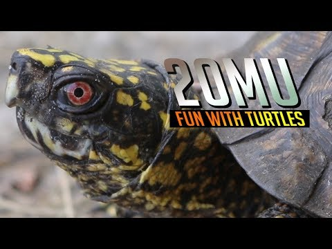 20MU - Fun With Turtles