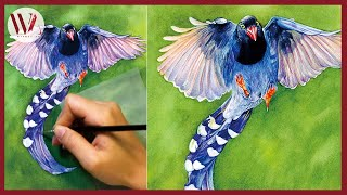How to Paint a Bird- Watercolor Tutorial- Taiwan Blue Magpie- Windy Shih