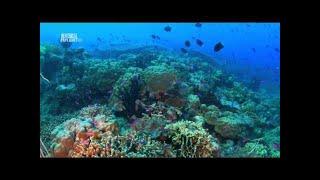 Австралия и Океания (серия 1). Чудеса Голубой Планеты.  Документальный сериал HD