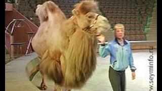 В Курском цирке пройдет новогодний карнавал животных
