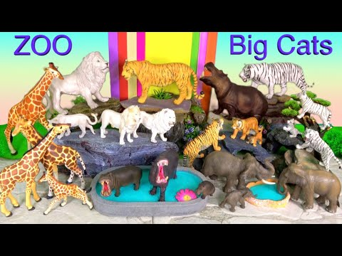 Big Cat Week 2020 Lions Tigers White Lion White Tiger Hippopotamus Elephants Giraffes
