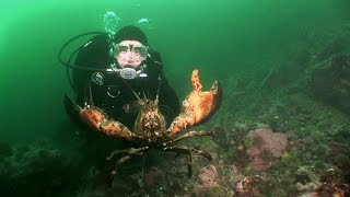 connectYoutube - Northern Lobsters of Maine | JONATHAN BIRD'S BLUE WORLD
