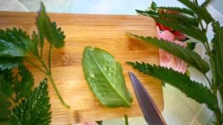 Крапивно-щавелевые щи на тушёнке