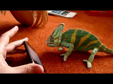 Смешные видео. Малыш и хамелеон