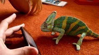 Хамелеон vs iPhone / Chameleon vs iPhone