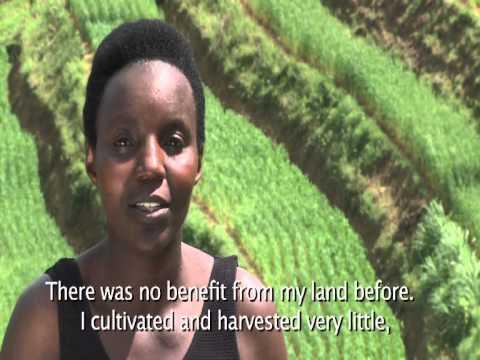 Agriculture transformation in Hillsides of Rwanda
