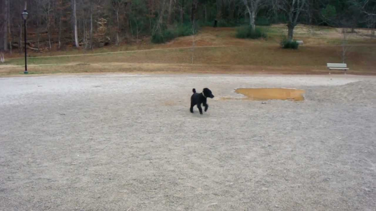 Concord Park Dog Park Knoxville