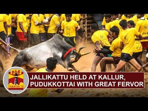 Jallikattu held at Kallur, Pudukkottai with great fervor | Thanthi TV