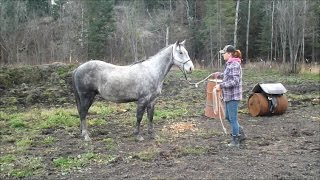 2010 Registered Quarter Horse Gelding - Blue