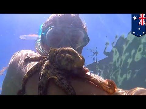 Octopus sticks to man snorkeling in Australia and won't let go - TomoNews