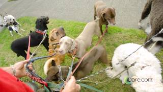 Care.com: What to Pay a Pet Sitter