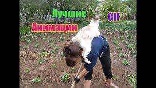 Лучшие GIF  анимации про животных и детей