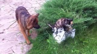 Собака и кошка играют вместе