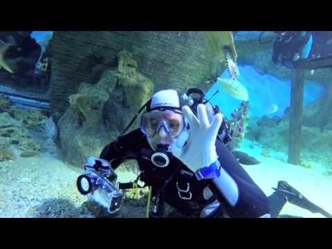 108 Давинг с акулами в Океанариуме РИО 1080