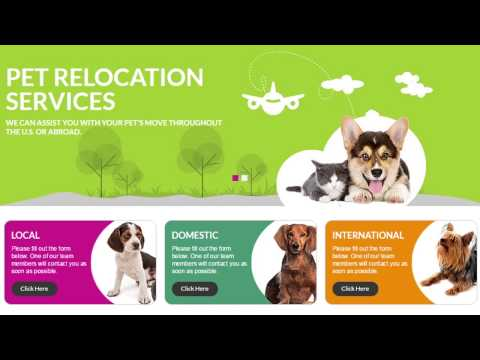 Local, Domestic, and International Pet Transportation