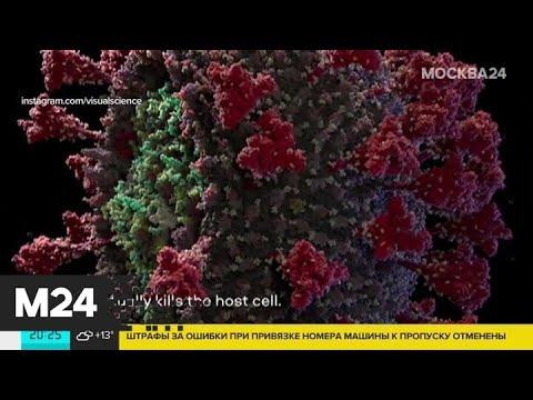Как выглядит коронавирус - Москва 24