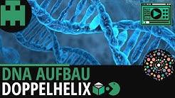 DNA Aufbau einfach erklärt│Biologie Lernvideo [Learning Level Up]