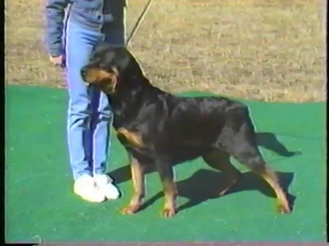 Von Ross Rottweilers - How to Select a Rottweiler Puppy and Develop a Champion